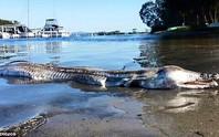 Quái vật dạt vào bờ ở Úc gây tranh cãi nảy lửa