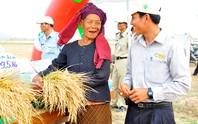 Ra nước ngoài nuôi bò, trồng lúa