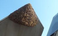 Mỹ: Siêu chiến đấu cơ F-22 Raptor bị 20.000 con ong dìm xuống đất