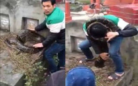 Phát hiện trăn khủng gần 40 kg trong nghĩa địa
