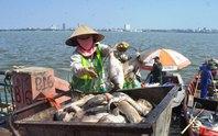 Bộ Công an điều tra vụ cá chết ở hồ Tây