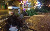 Bão số 3 chưa tới, cây đổ la liệt tại Hà Nội