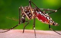 Khuyến cáo tạm ngừng mang thai vì virus Zika