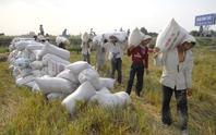 Gạo Việt bị nhiều quốc gia qua mặt