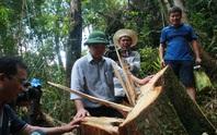 Điều tra vụ phá rừng pơ mu: Không có vùng cấm