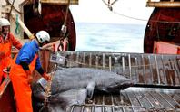 Cá mập thọ 400 tuổi
