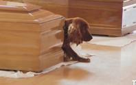 Động đất ở Ý: Chú chó ngồi lì cạnh quan tài chủ