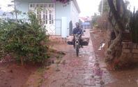 Lâm Đồng có mưa vàng