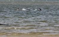 Thêm bằng chứng về quái vật hồ Loch Ness?