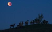 Ở đâu tốt nhất để ngắm siêu trăng thế kỷ?