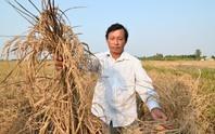 Trung Quốc xả nước cứu hạn, mặn: Đừng hy vọng nhiều!