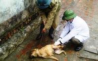 Bị chó dại cắn, chủ trang trại thiệt mạng vì chủ quan