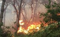 Cháy lớn rừng phòng hộ hơn 8 giờ, vẫn chưa dập được