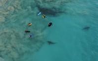 Kinh hoàng nhóm học sinh bơi lội bên trên 400 con cá mập