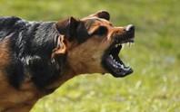 Đắk Lắk: Chó dại cắn 2 người tử vong