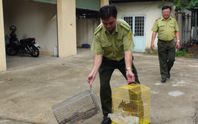 Bắt quả tang vụ buôn bán động vật hoang dã quý hiếm