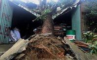 Tháo chạy khi cây cổ thụ đè sập mái nhà
