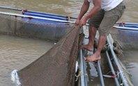 Lại lo xả lũ thủy điện Hòa Bình