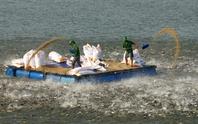 Những hình ảnh đẹp về cá tra từ ao nuôi đến nhà máy