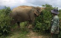 Hồi hộp chờ voi nhà vượt cạn