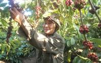 Tìm bản sắc cho cà phê Việt