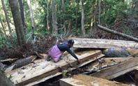 Ba đoàn kiểm tra việc phá rừng, chủ tịch huyện vẫn chưa tin