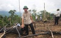 Phó chủ tịch tỉnh đi bộ 8 giờ kiểm tra hiện trường phá rừng