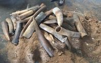 Khởi tố vụ buôn lậu gần 1,4 tấn ngà voi tại cảng Cát Lái
