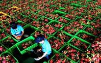 Doanh nghiệp Việt 'từ chối' cả đơn đặt hàng của siêu thị Mỹ, Dubai