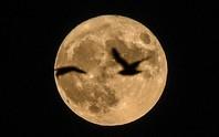 Siêu mặt trăng xuất hiện vào cuối tuần này