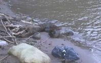 Thi thể trẻ sơ sinh nổi dưới đập nước