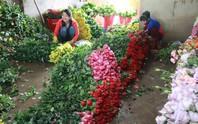 Giá hoa hồng Đà Lạt tăng 3 lần trước lễ 20-10