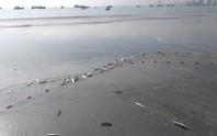 Ngợp với cảnh đầy ắp cá đối áp sát bờ biển Đà Nẵng