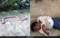 Bị rắn cắn, nhai luôn đầu rắn trả thù