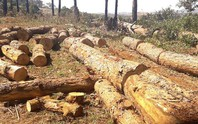 Bắt chủ tịch xã tiếp tay phá rừng