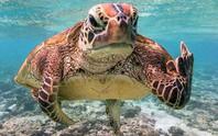 Bức ảnh chú rùa tỏ thái độ trước ống kính gây sốt bất ngờ