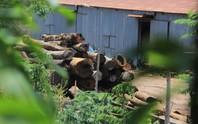 Khám xét nhà, bắt khẩn cấp trùm gỗ lậu Phượng râu