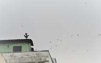 Nuôi yến tự phát, coi chừng trắng tay: Xóa sổ chim yến khỏi nội đô