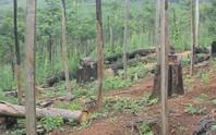 Ăn đất rừng, nhiều lãnh đạo bị kỷ luật