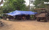 (VIDEO)- Gỗ lậu Phượng râu và cung đường con voi chui lọt lỗ kim
