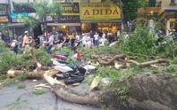 Hà Nội: Cây phượng bất ngờ đổ, đè ập lên 5 người đi đường