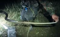 Lạnh người  với cảnh săn rắn giữa đêm nước nổi