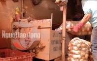 VIDEO: Vạch mặt chiêu trò phù phép nông sản Trung Quốc nhái Đà Lạt