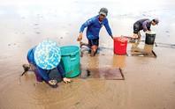 Có 1 bãi bồi ở Cà Mau khi nước rút lộ đầy đặc sản biển