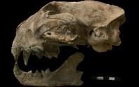 Bí ẩn quái thú chết cùng cô gái trong mộ cổ Maya