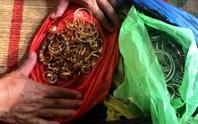 Điều tra nhóm trộm 200 cây vàng, phát hiện 11 vụ trộm trị giá 14 tỉ đồng