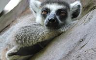 Clip: Những khoảnh khắc cưng muốn xỉu ở  vườn thú Safari Phú Quốc