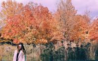 Mùa thu đã nhuộm vàng xứ sở lá phong