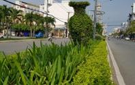 Thanh tra vụ chi hơn 104 tỉ đồng trồng cây xanh ở Sóc Trăng