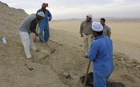 Quái vật biến hình 35 triệu tuổi lộ diện giữa sa mạc Ai Cập